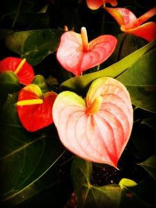 Love being displayed through creation!