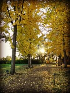 November Longwood 2014 011